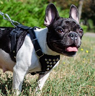 Small Dog Harness for French Bulldog Walking | Bulldog Harness