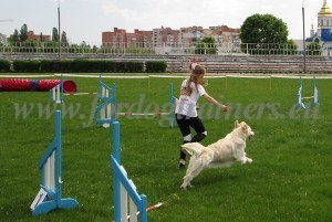 Agility International Championship