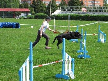 Agility Dog Sports