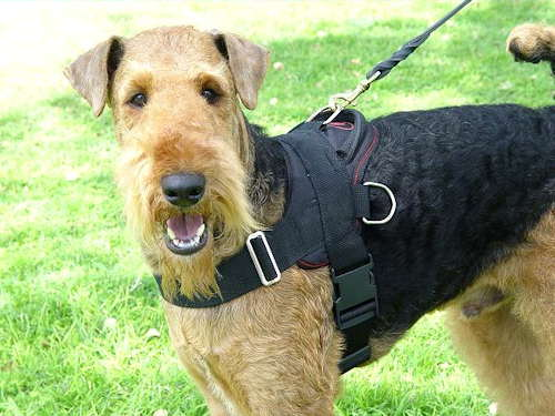 Tracking Harness Airedale Terrier