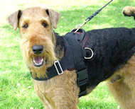 Airedale Terrier Nylon multi-purpose dog harness H6