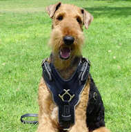 Airedale Terrier Exclusive Luxury Padded Leather Harness