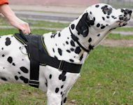 Dalmatian Nylon multi-purpose dog harness H6
