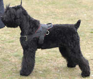 Black Russian Terrier Nylon dog harness for tracking/pulling H6