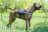 Boxer Pet Harness | Nylon Harnesses for Boxer ➫