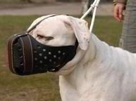 "Leather Dog Muzzle ""Dondi plus"" for American Bulldog"