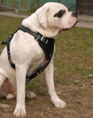 Protection/Attack Leather Dog Harness H1 for American Bulldog