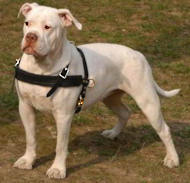 American Bulldog Tracking /Pulling/Walking Leather Dog Harness