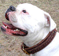 American Bulldog Handcrafted Braided Leather Dog Collar