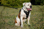 American Bulldog Luxury Handcrafted Padded Leather Harness