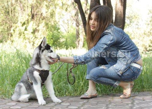 Dresser son Chien à Reconnaître son Nom : Dog harness, Dog