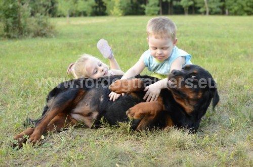 Rappel «Couché» : Dog harness, Dog muzzle, Dog collar, dog