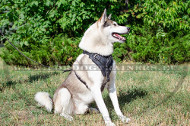 Dog Harness for Training and Daily Walking with Laika