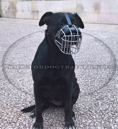 Basket Muzzle for Large Strong Dog