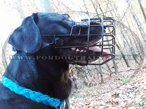 Antifrost Basket Muzzle for Labrador