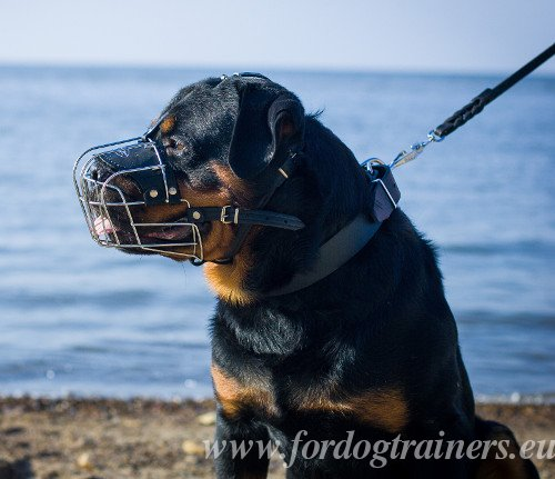 Cage Muzzle for Large Dogs Padded