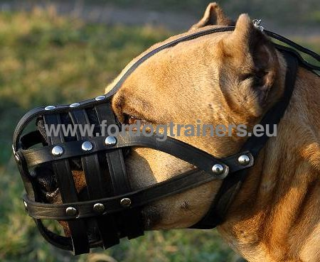 Leather Basket Muzzle for Amstaff