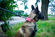 Spiky Leather Collar for Belgian Malinois