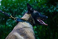 Leather Spiked Dog Collar for Malinois