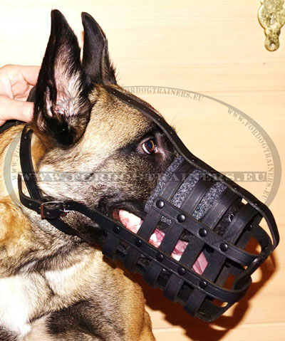 Leather Muzzle for a Dog Malinois