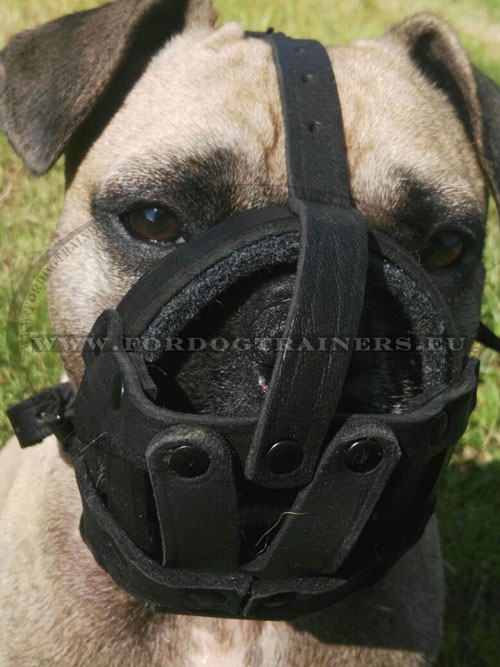 Small Bulldogs Leather Muzzle