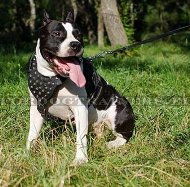 Amstaff Walking Harness | Harness of Decorated Leather ▼
