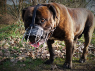 Boerboel Wire Basket Muzzle with Padding▧