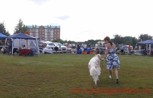 Borzoi at Championnat National d'Obeissance