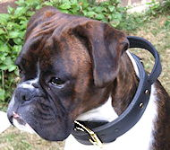 Leather dog collar with handle for Boxer