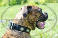 Collar for Any-Season Boxer Training | Nylon Collars for Boxer
