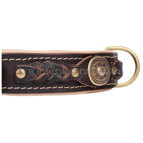 Luxurious Dog Collar with Diligently Set Hardware