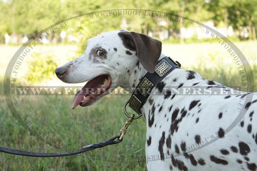 Braided Leash for Dalmatian