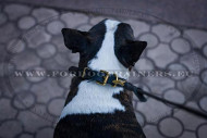 Collier trendy pour Bull Terrier | Collier Cuir & Laiton⬗