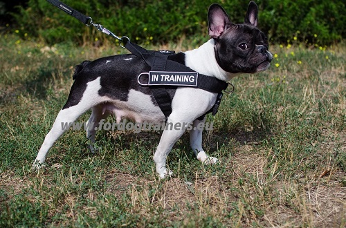 French Bulldog Harness with Handle