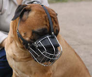 Bullmastiff Wire Basket dog muzzle M4