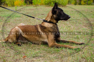 Simple Leather Dog Collar