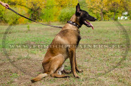 Nylon Collar with Silver Plates for Fashionable Malinois