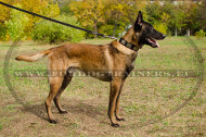 Nylon Collar with Decorations - Ingenuity for Strong Malinois