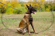 Leather Collar Simple & Elegant for Malinois Dog