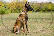 Malinois Leather Collar with Rusted Plates and Spikes