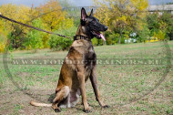 Leather Collar Exclusive Decoration Style for Malinois