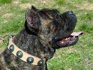 Cane Corso Leather Dog Collar with Blue Stones
