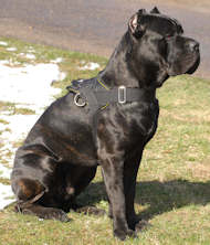 Cane Corso Nylon Multi-purpose Harness⭐⭐⭐
