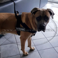 Nylon Harness with Patch Ability for Cane Corso