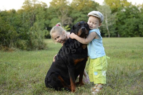 Children Playing with Rottweiler