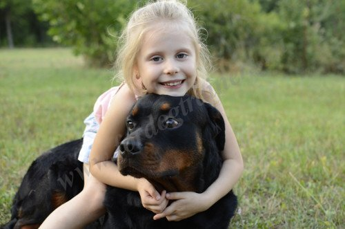 Rottweiler with Small Child