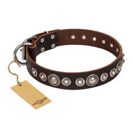 "Unique Brown Dog Collar ""Step and Sparkle"" FDT Artisan"