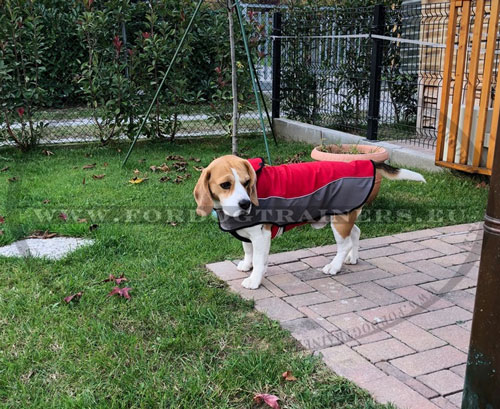 Waterproof Dog Coat for Winter Walking