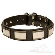 Luxury Dog Collar with Decorative Plates