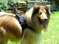 Collie Nylon multi-purpose dog harness H6